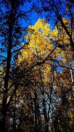 TreeScene1